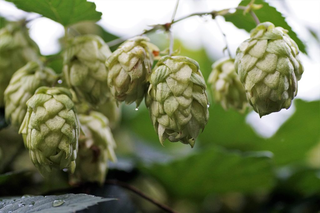 hop pairing and combinations